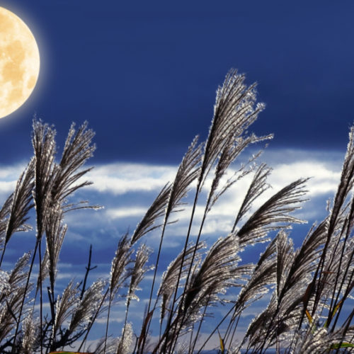 中秋の名月「月見団子」